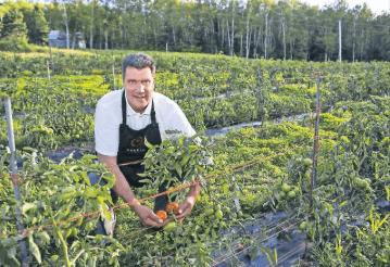 omerto-tomato-vintner